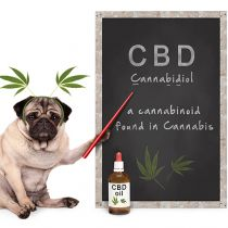 Legal Issues Involving CBD In K-12 Schools For Students and Employees